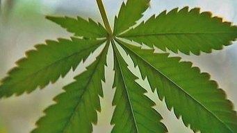 SD Explained: Medical Marijuana Shops