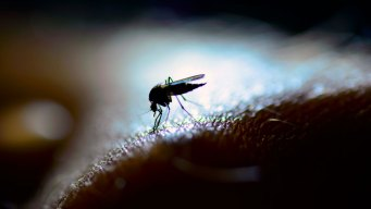 Mosquito Suppression Operations Planned in Inland Empire
