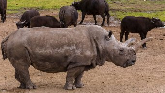 """Rally 4 Rhinos"" Raises Awareness on Conservation Efforts"
