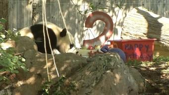 Bei Bei the Panda Celebrates 2nd Birthday at National Zoo