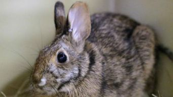 NYC Woman Guilty of Abusing 100 Rabbits