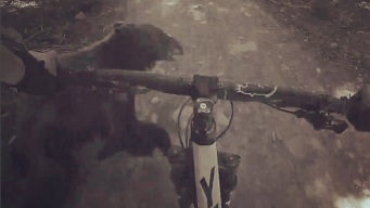 Caught on Video: Mountain Biker Crashes Into Bear