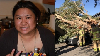Woman Killed After Tree Splits in Half, Crushes Her Car