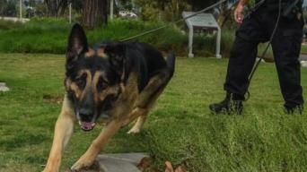 Police Dog Trained to Sniff Out Crime