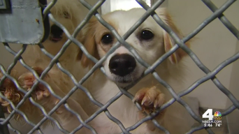 25 Dogs Seized From Home Puts Strain on Shelter