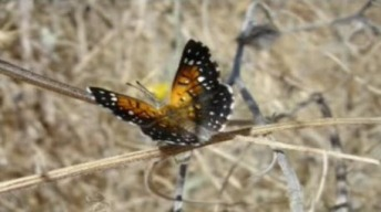 Planned Lawsuit Claims PG&E Power Plant Threatens Butterflies