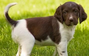 Rare Day: Pups Inside the Botanic Garden