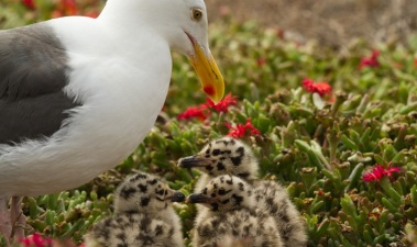 Islands of a Feather: Nesting Season Ahead