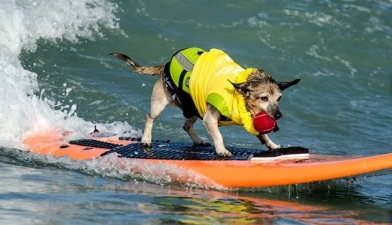 Hounds Hit the H20: Surf Dog
