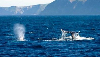 Oxnard's Whale-Watching to Start