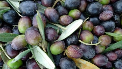 Paso Robles Olive Fest Is Free, Flavorful