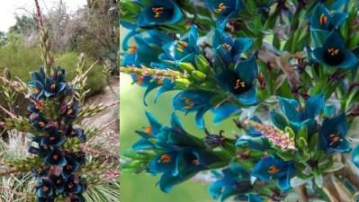 A Strange Sapphire Tower Is Blooming in Encinitas
