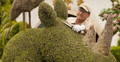 A Disneyland Tour for Greenery Buffs