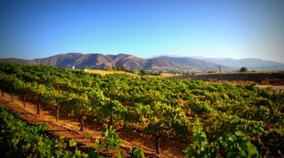 Temecula's World of Wine