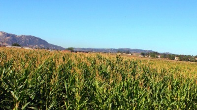 Corn Maze Time: Big Horse on the Horizon
