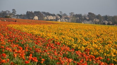 Bloom Time: Flower Fields