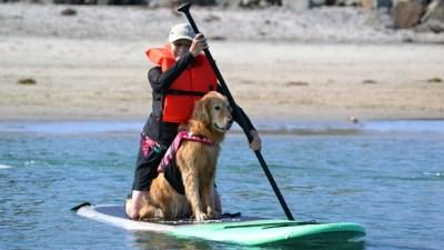 Salty Snouts: Surf Dog Classes
