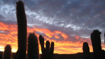 More Than Cacti
