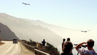 California Condor Viewing Tour