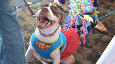 Join a Canine Costume Cruise, Arf Arf
