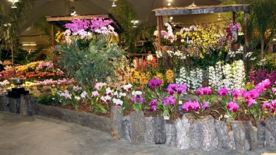 In Bloom: Santa Barbara Orchid Show