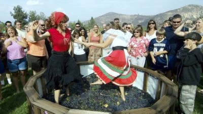 Orfila Winery Grape Stomp