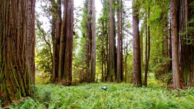 #RedwoodsFriday Launches: Free Day-Use Passes