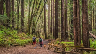 Free Tree Fest: Stand for the Redwoods