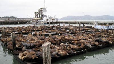 Lucky 22 for the Pier 39 Sea Lions