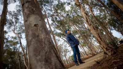 Wind Garden: New Tree + Breeze Symphony