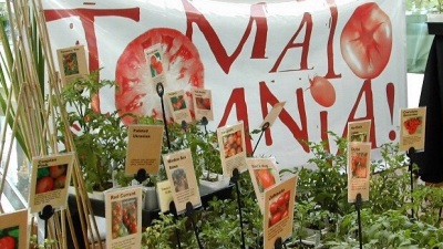 Tomatomania! Delish Tour on the Roll