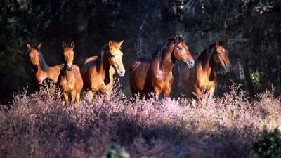 Wildflowers & Wild Horses