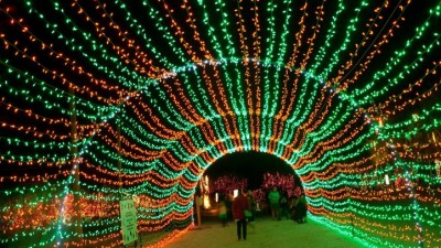 Palm Desert's Wildlights