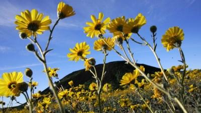 Desert Wildflowers Outlook