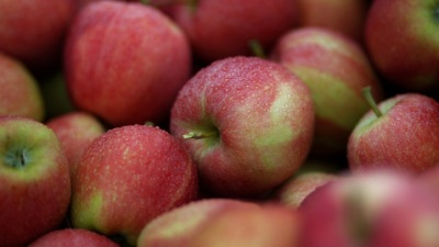 Oak Glen Apple Season Opens