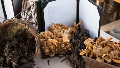 Foraging Adventure: Big Sur Mushrooms