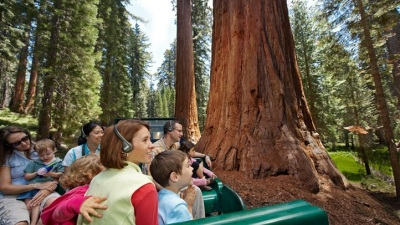 The Big Trees Tour of Yosemite's Mariposa Grove