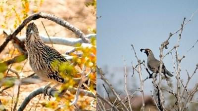 Hello, Sky Friends: Joshua Tree Bird Count