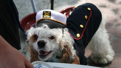 A Hound-Happy Hornblower Kind of Day