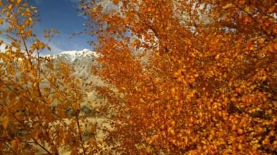 'California Fall Color' Heats Up (Or, Um, Cools Down)