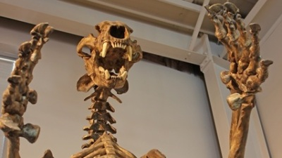 Madera Wonders: Fossils to Falls Drive