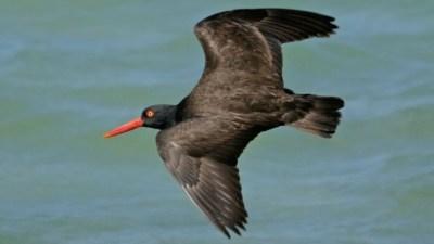 Birdy Boat Trip: A Channel Island Adventure