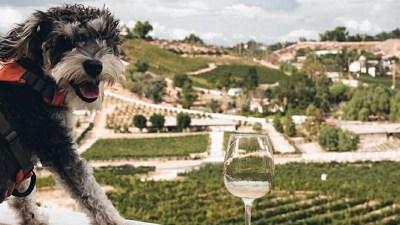 Temecula + Your BFF: Oak Mountain Dog Day