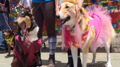 Taffeta and Tails: Puppy Prom