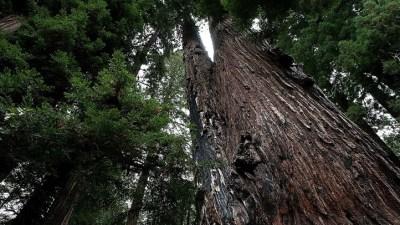 National Parks Centennial Bash