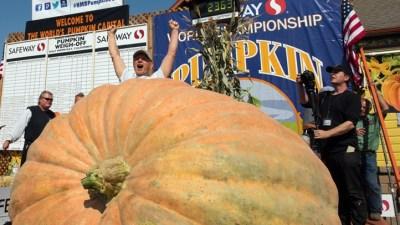 Mega Pumpkins Rolling for Half Moon Bay