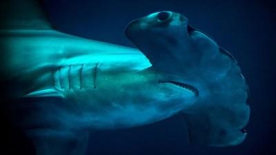 Sharky Screen Time, from Monterey Bay Aquarium