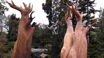 Eye a New 'Tree Sculpture' in Encinitas