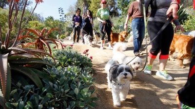 Pups + People to Stroll at San Diego Botanic Garden