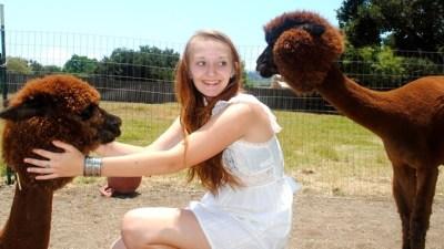 Shearing Day Up Ojai Way